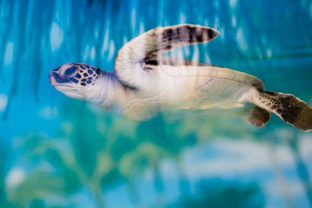 Ξεκίνησαν οι εκσκαφές σε φωλιές θαλάσσιων χελωνών | tanea.gr