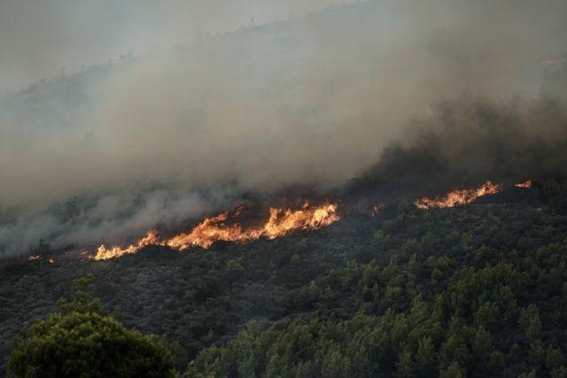 Φωτιά στις Αμάδες της Χίου | tanea.gr