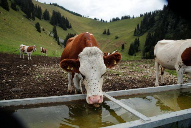 Ελβετία: Γέμισε νεκρά ψάρια ο Ρήνος | tanea.gr