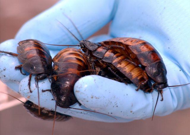 Εκτρέφει κατσαρίδες και τις ταΐζει με απόβλητα της κουζίνας | tanea.gr
