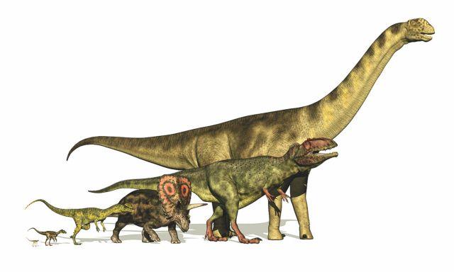 Δεινόσαυροι : Σε τι οφείλεται η ποικιλία σχημάτων και μεγεθών | tanea.gr