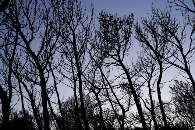 Μάικλ Μαν: Η κλιματική αλλαγή αιτία για τις ισχυρές πυρκαγιές | tanea.gr