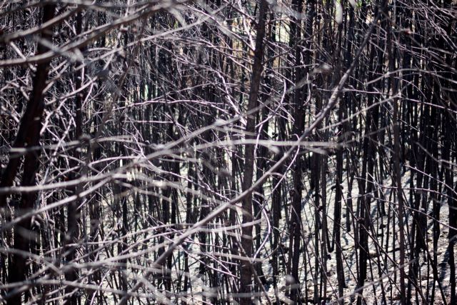 ΝΔ: Οι ευθύνες της κυβέρνησης για την πυρκαγιά στο Μάτι δεν παραγράφονται | tanea.gr