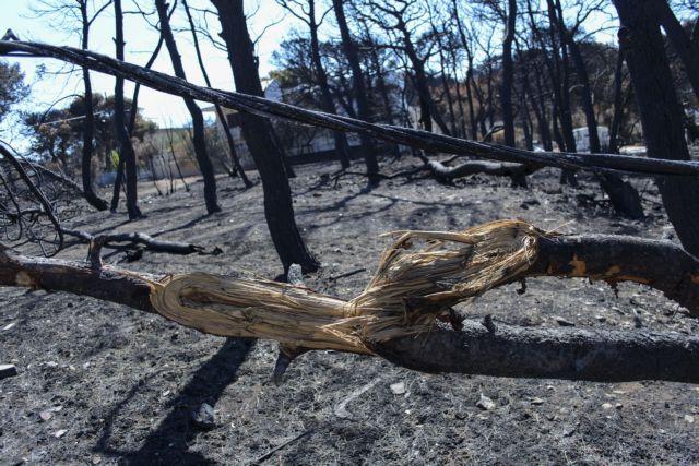 Πυρκαγιές : Λίστα με 92 νεκρούς διαβιβάστηκε στην Εισαγγελία | tanea.gr