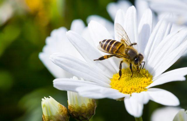 Μπορεί μια μέλισσα να μας σώσει από το πλαστικό; | tanea.gr