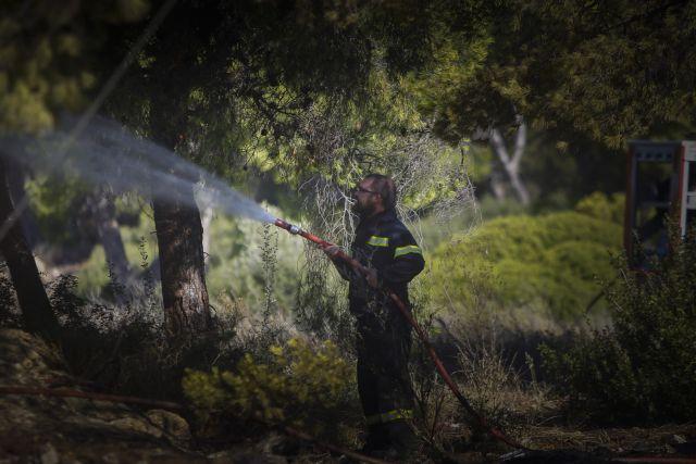 Υπό έλεγχο πυρκαγιά στην Κασσάνδρα   tanea.gr