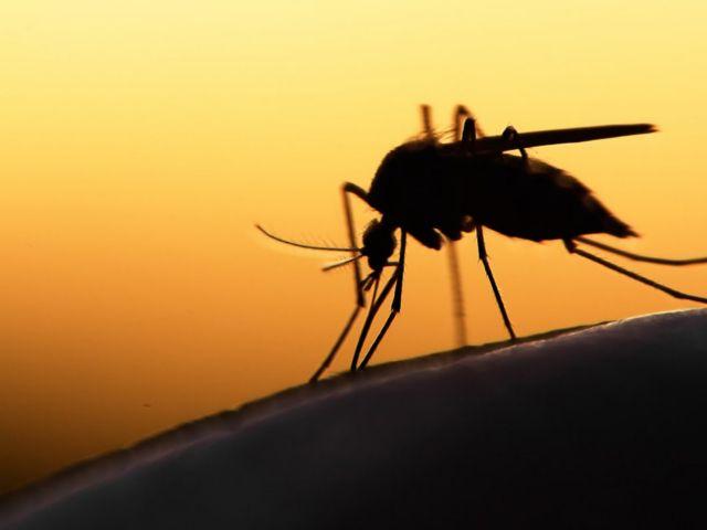 Κεντρική Μακεδονία: Εξήντα τα κρούσματα του ιού του Δυτικού Νείλου | tanea.gr