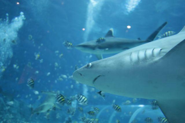 Κι όμως υπάρχουν και «χορτοφάγοι» καρχαρίες | tanea.gr