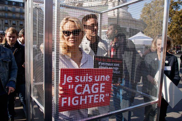Η Πάμελα Αντερσον μπήκε σε… κλουβί, για χάρη των ζώων | tanea.gr