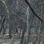 Φονική πυρκαγιά στο Μάτι : Τι αποκαλύπτει το πόρισμα Λιότσου