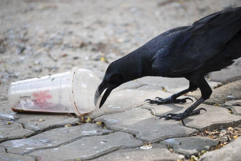 Εισήγηση για κατάργηση πλαστικών μίας χρήσης: Δείτε τα προϊόντα | tanea.gr