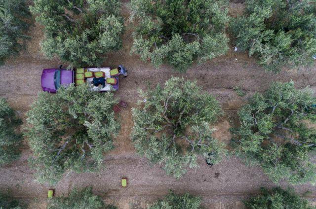 ΟΠΕΚΑ: Εως τις 9/11 οι αιτήσεις επιδόματος για πολύτεκνες αγρότισσες | tanea.gr