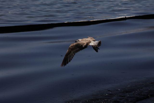 Καμπανάκι ΟΗΕ: «Σιωπηλή» απειλή η απώλεια της βιοποικιλότητας | tanea.gr