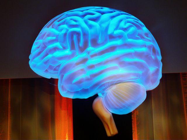 Στο φως νέα άγνωστη περιοχή του εγκεφάλου | tanea.gr