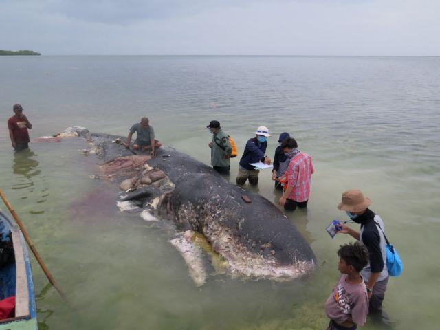 Ινδονησία: Νεκρή φάλαινα με έξι κιλά πλαστικά στο στομάχι της | tanea.gr
