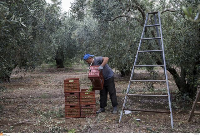 ΣΑΣΟΕΕ: Να μείνει στους αγρότες η περιουσία των συνεταιρισμών | tanea.gr