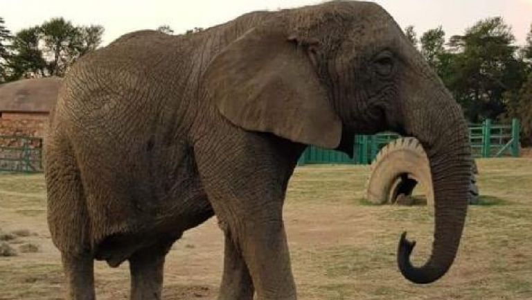 Γιοχάνεσμπουργκ: Διαδηλώσεις για την απελευθέρωση της τελευταία ελεφαντίνας | tanea.gr