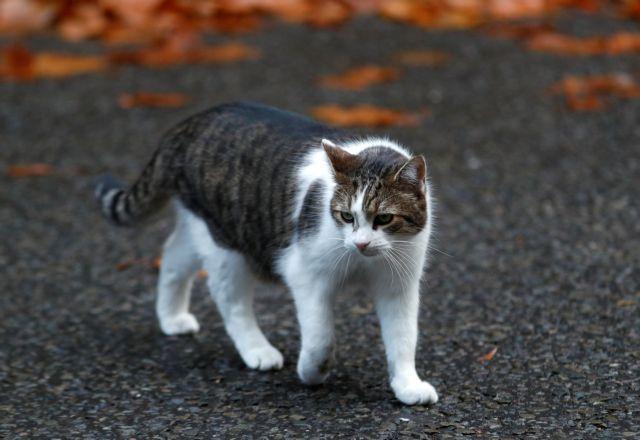 Στα σκαριά εμβόλιο για την αλλεργία στις γάτες | tanea.gr