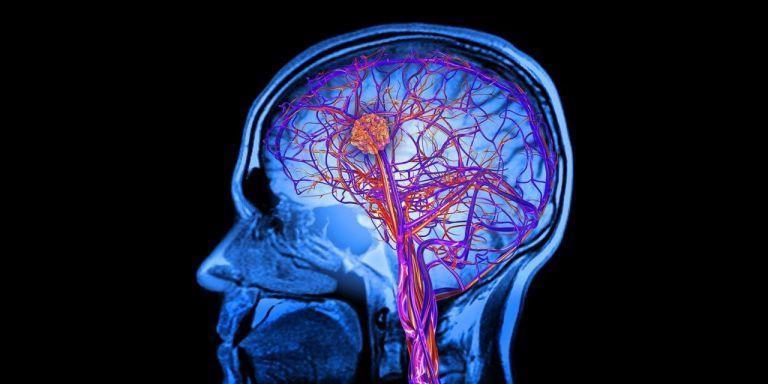 Τα μυστικά του ανθρώπινου εγκεφάλου που μάθαμε το 2018 | tanea.gr