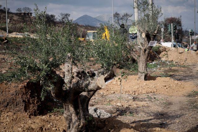 WWF: Δυσάρεστη η εικόνα  στη Ελλάδα για την προστασία του περιβάλλοντος | tanea.gr