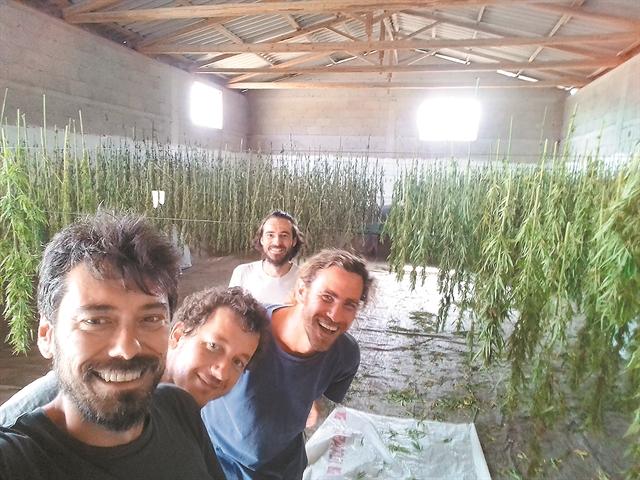 Η καλλιέργεια που μπορεί να γίνει βαριά βιομηχανία | tanea.gr