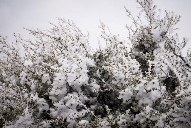 Πάρνηθα : Πυκνή χιονόπτωση - Εκλεισε ο δρόμος από το τελεφερίκ | tanea.gr