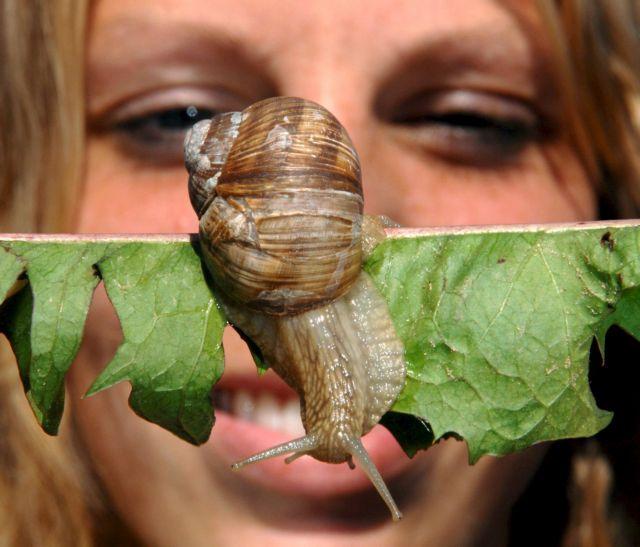 Θησαυρός ομορφιάς το σαλιγκάρι | tanea.gr