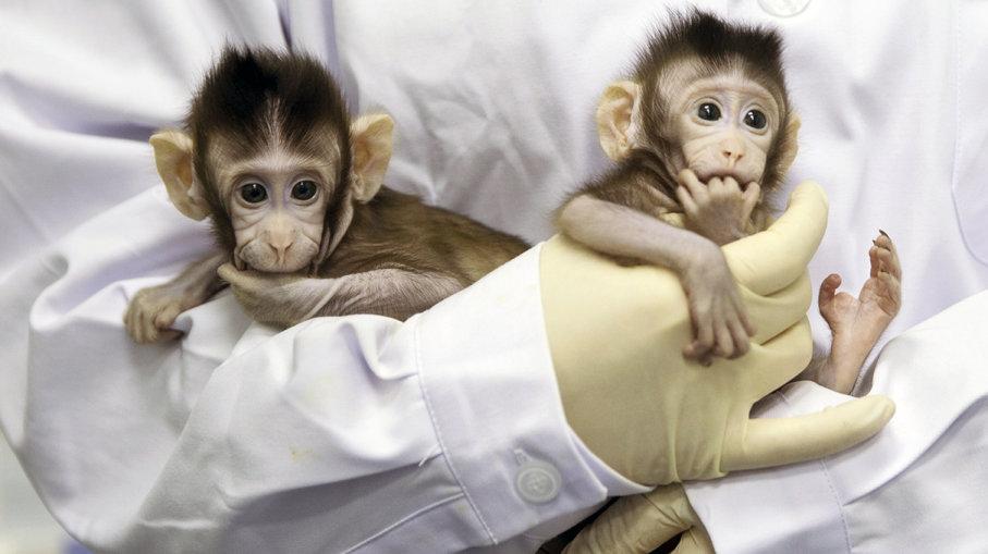 Επιστήμονες στην Κίνα δημιούργησαν τις πρώτες πέντε κλωνοποιημένες μαϊμούδες 5dddbcdf902