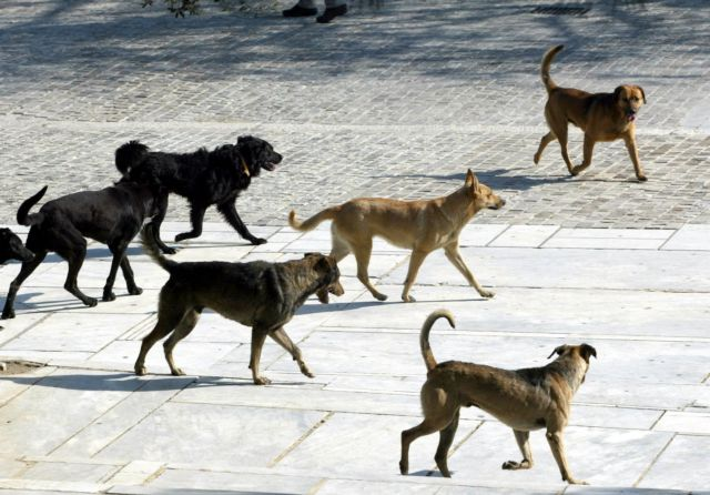 Λάρισα : Στο Νοσοκομείο γυναίκα από επίθεση αδέσποτου σκύλου | tanea.gr