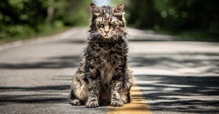 Η μεγάλη αλλαγή της νέας ταινίας «Pet Sematary» στο βιβλίο του Στίβεν Κινγκ | tanea.gr