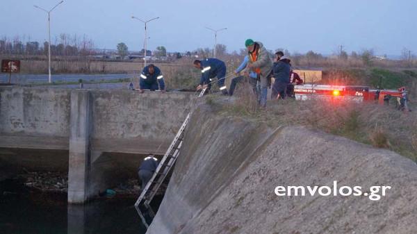 Ημαθία: Διάσωση λύκου που είχε εγκλωβιστεί σε αρδευτικό κανάλι | tanea.gr