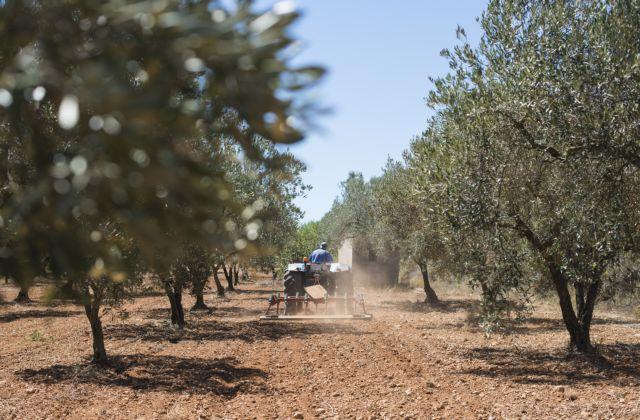 Κρήτη: Ηλικιωμένος κρεμάστηκε από δέντρο στον Άγιο Νικόλαο | tanea.gr