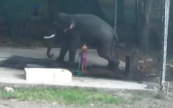 Ελέφαντας σκότωσε τον εκπαιδευτή που τον μαστίγωνε | tanea.gr