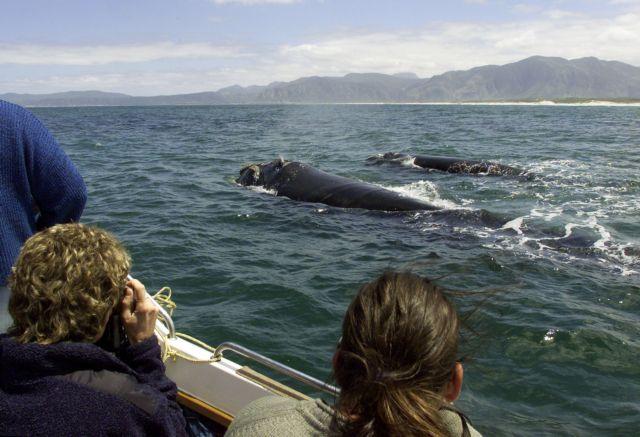 Ιαπωνία: 87 τραυματίες από την σύγκρουση φέρι με φάλαινα | tanea.gr