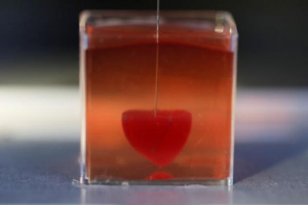 Πραγματικότητα η πρώτη 3D καρδιά από ανθρώπινο ιστό και με αγγεία   tanea.gr