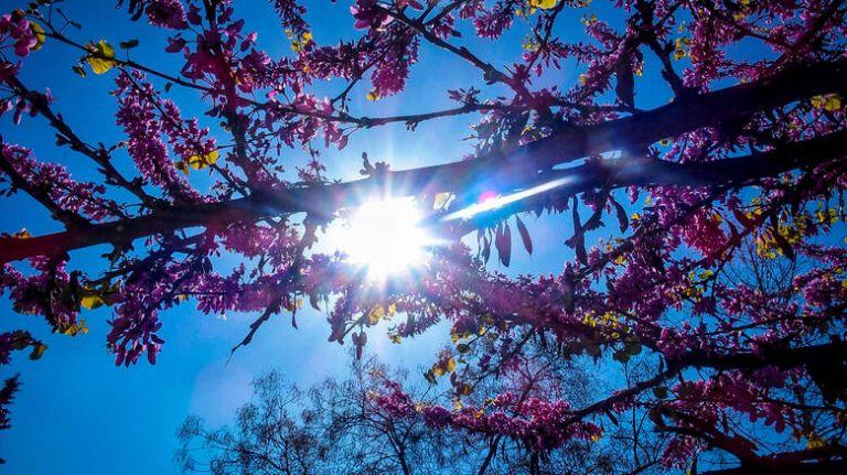 Καιρός Πάσχα: Με τι καιρό θα σουβλίσουμε τον οβελία | tanea.gr