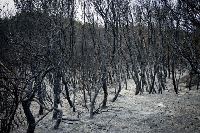Το δάσος της Στροφυλιάς μετά την πυρκαγιά | tanea.gr