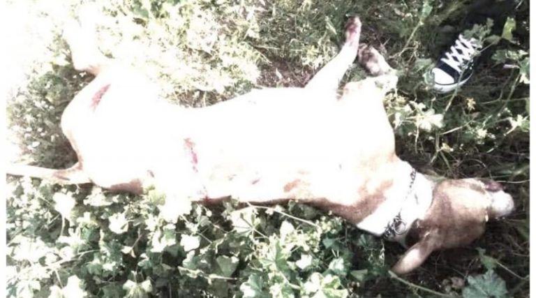 Φρίκη στην Αργυρούπολη: Εσφαξε με 17 μαχαιριές ένα πιτ μπουλ   tanea.gr