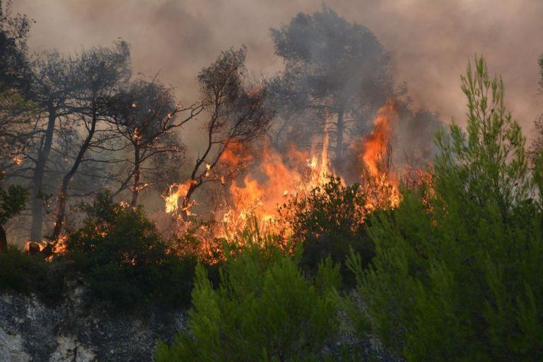 Υπό έλεγχο η μεγάλη πυρκαγιά στο δάσος της Στροφυλιάς | tanea.gr