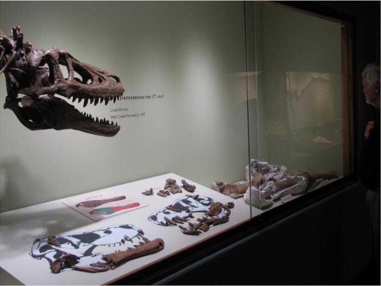 Σου περισσεύουν 3 εκατομμύρια δολάρια; Αγόρασε το απολίθωμα ενόςΤυραννόσαυρου! | tanea.gr
