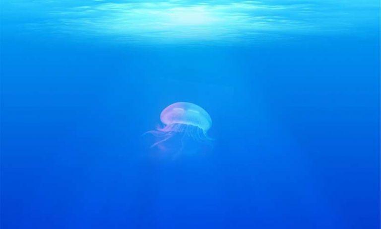 Καταγράφηκαν 200.000 είδη θαλάσσιων ιών | tanea.gr