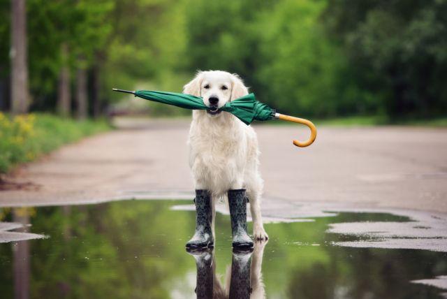 Έρχονται βροχές, καταιγίδες και χαλάζι την Παρασκευή | tanea.gr