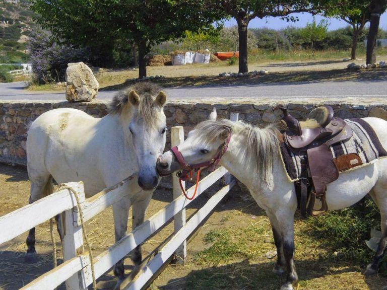 Τα σημερινά άλογα δεν μοιάζουν καθόλου με εκείνα της αρχαιότητας   tanea.gr