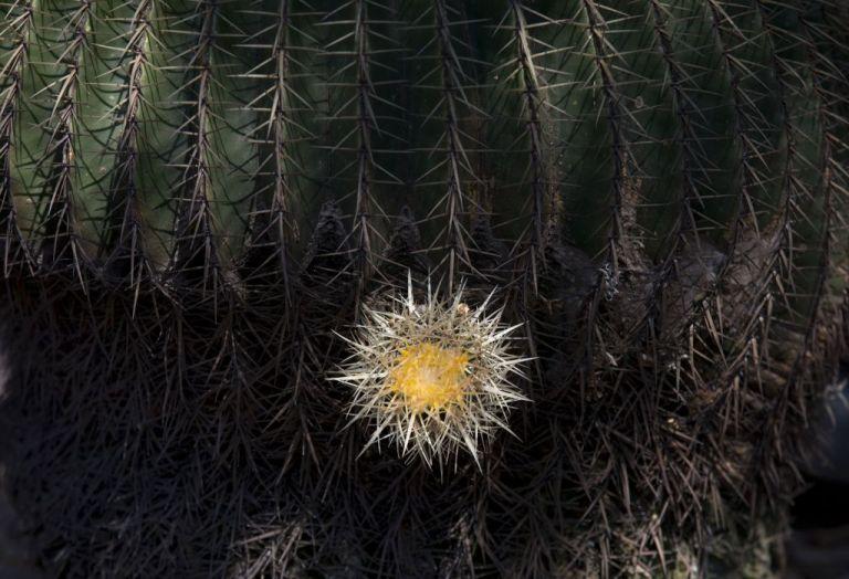 Σχεδόν 600 είδη φυτών εξαφανίστηκαν τα τελευταία 250 χρόνια | tanea.gr