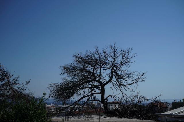 Μάτι, ένας χρόνος μετά: Θλίψη, θυμός, εγκατάλειψη | tanea.gr