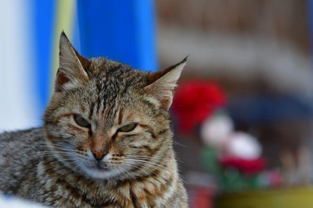 Ποινή φυλάκισης και βαρύ πρόστιμο σε Λυκειάρχη που πυροβόλησε γάτα | tanea.gr