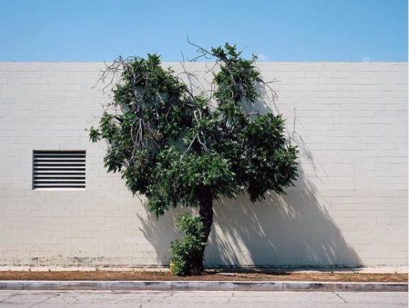 «Ένα δέντρο μεγαλώνει σε»… μια πόλη | tanea.gr