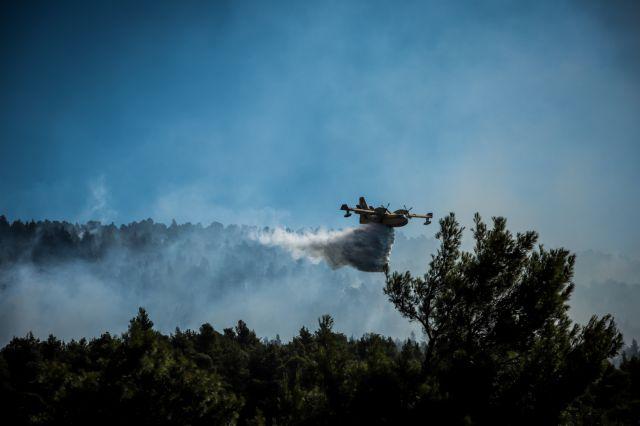 Στη μείξη των δασών βλέπει την λύση για την αποφυγή πυρκαγιών ο δασάρχης Κιλκίς | tanea.gr