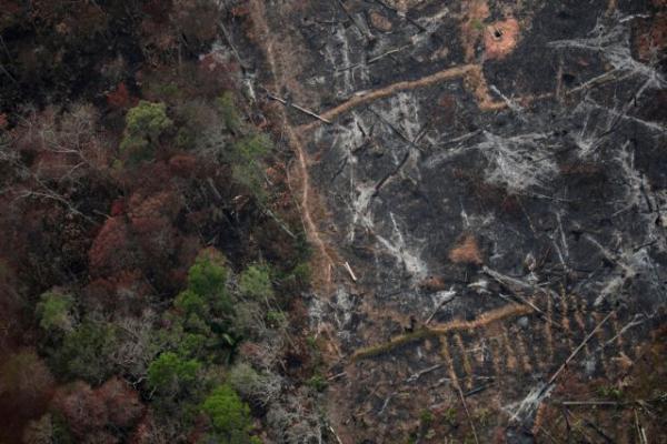 Η έκκληση του πάπα για την καταστροφή στον Αμαζόνιο | tanea.gr