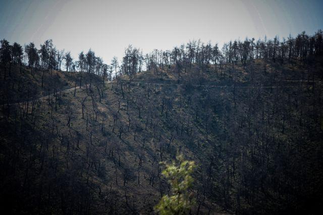 Εύβοια: Σημαντικές δασικές εκτάσεις αφανίστηκαν από την πυρκαγιά | tanea.gr